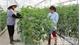 60 models of hi-tech farming built in Bac Giang