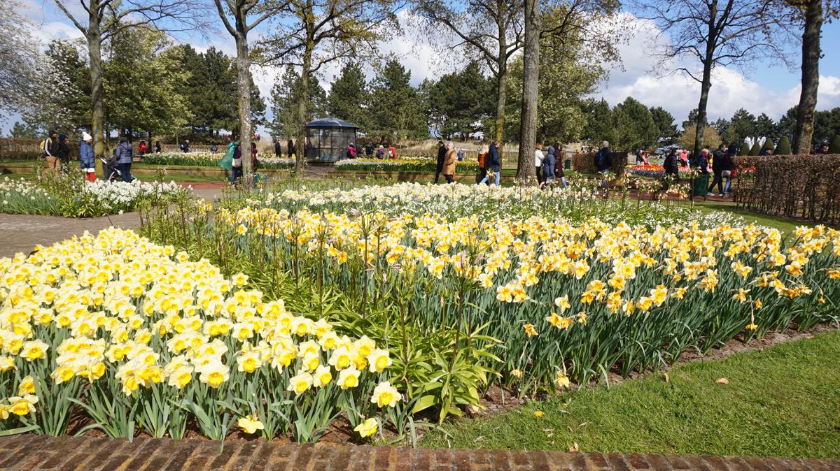 Khám phá, thiên đường hoa Tulip, Hà Lan, thủ đô Amsterdam
