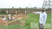 Xã Xuân Cẩm (Hiệp Hòa): Chôn hủy lợn mắc bệnh dịch tả lợn châu Phi không đúng quy trình