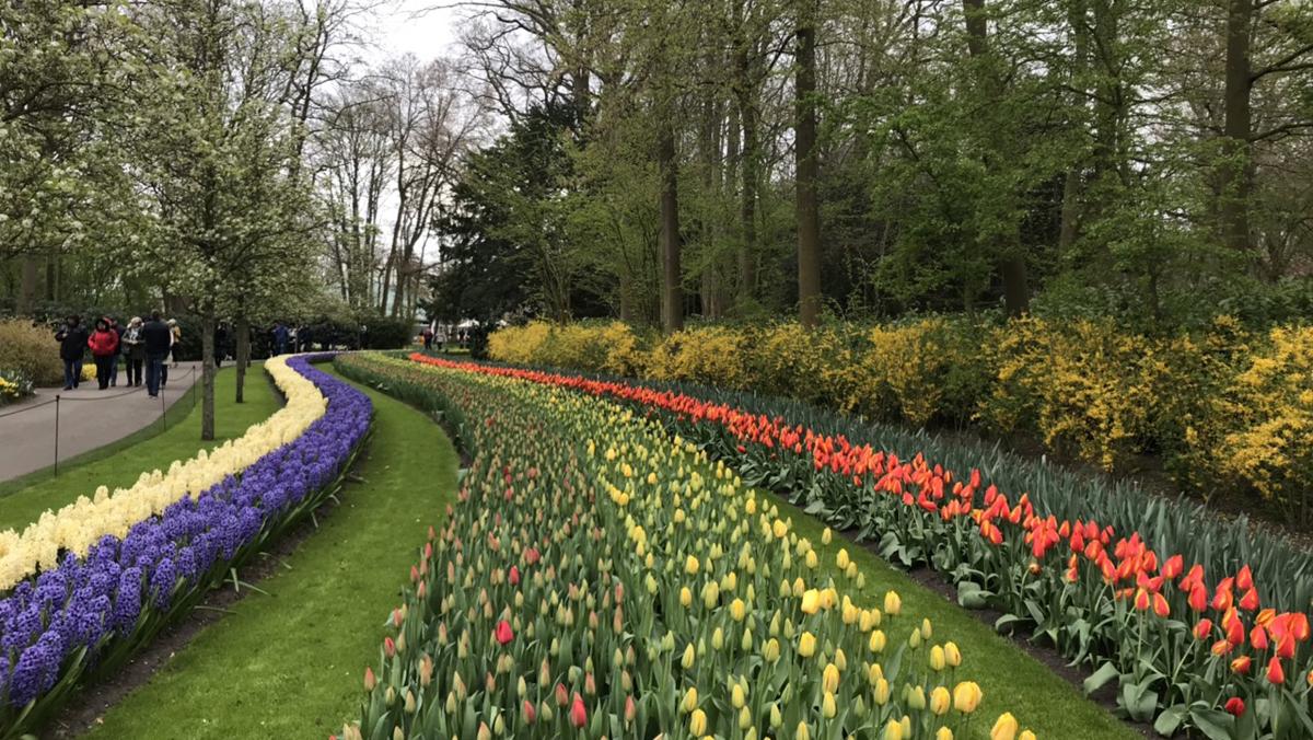 Khám phá thiên đường hoa Tulip tại Hà Lan