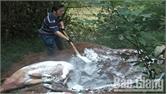 Một người dân Bắc Giang tình nguyện dọn xác lợn ở đèo Chinh, bảo vệ môi trường