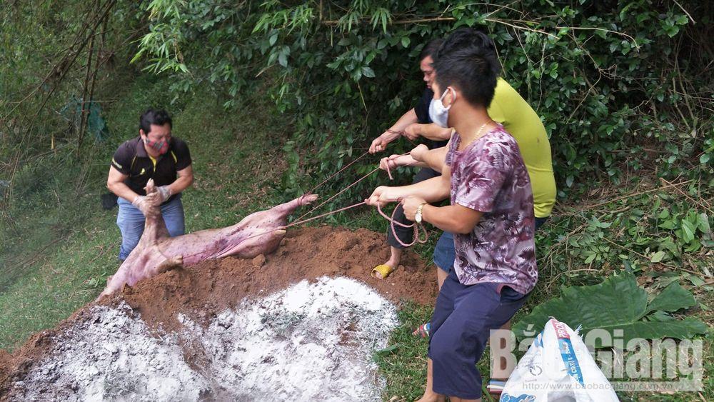 Thêm nhiều người cùng anh Vi Văn Ngọc chôn xác lợn tại đèo Chinh