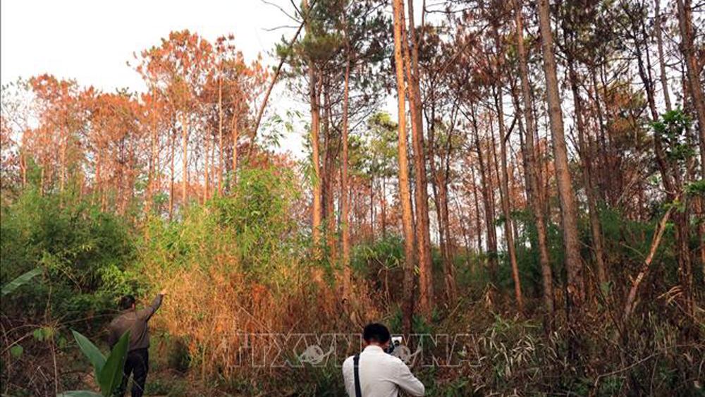 điều tra rừng thông, Lâm Đồng, hạ độc, phá hoại, Thủ tướng chính phủ