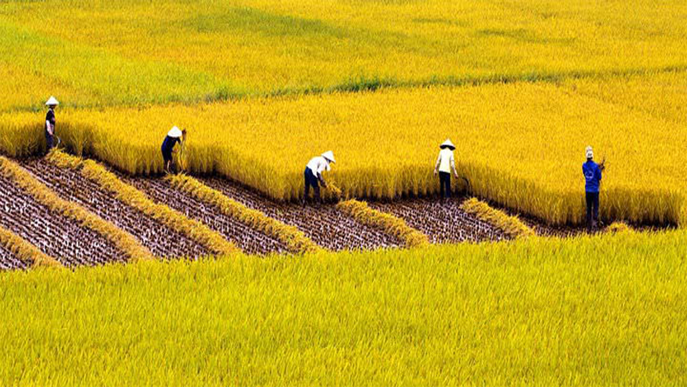 Vietnam, China look to increase rice trade cooperation