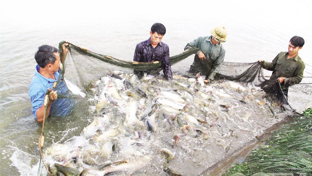 nuôi cá, Yên Dũng, sông Cầu, Bắc Giang, cá, HTX Thắng Lợi, thủy sản