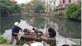 Xử lý ô nhiễm tại hồ Tỉnh Đội 1