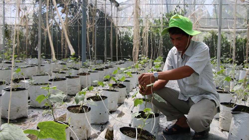 Mekong farmers make organic switch to improve business
