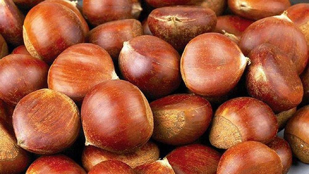 Bắt giữ 440 tấn hạt dẻ và 10 tấn hàng đông lạnh nhập lậu tại Lào Cai