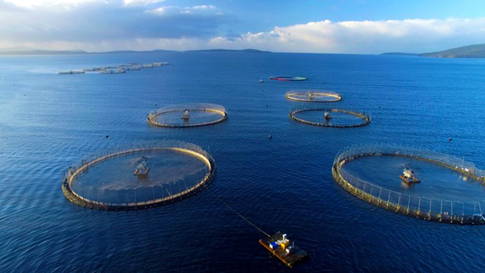 Vietnam, sustainable mariculture development, seafood reserves, shrimp and fish farming,  waters and reservoirs