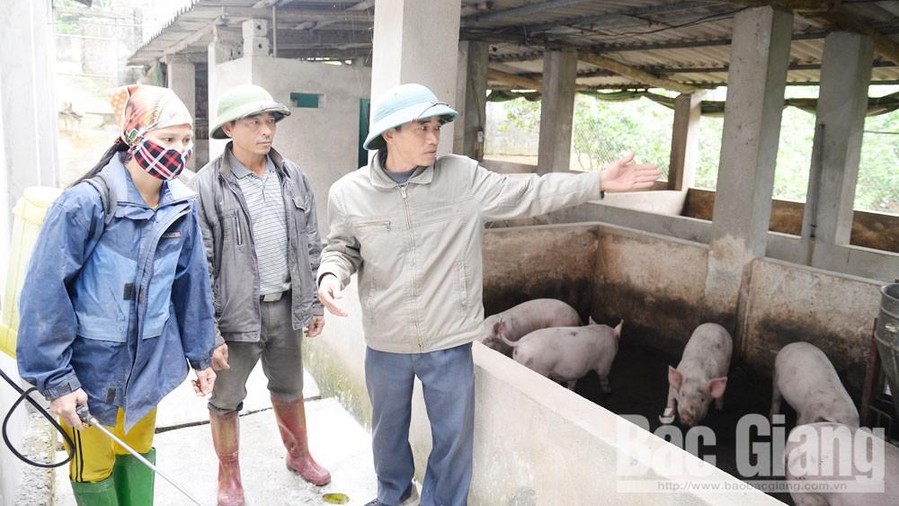 """dịch tả lợn châu Phi, """"trên nóng, dưới lạnh"""", Bắc Giang, người chăn nuôi, phòng, chống dịch bệnh hiệu quả"""