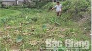 Cần xử lý nghiêm một bí thư chi bộ phá hoại cây trồng của nông dân