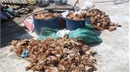 Hà Tĩnh: Khẩn trương làm rõ việc một nhóm người ném đá vào trang trại nuôi gà