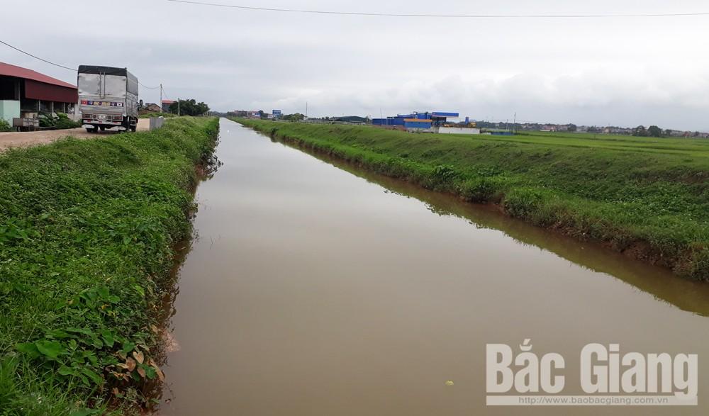 không còn xác lợn, nơi công cộng, dịch tả lợn châu Phi, xác lợn, DTLCP, tỉnh Bắc Giang