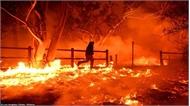 Mỹ công bố nguyên nhân gây vụ cháy rừng kinh hoàng năm 2018