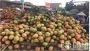 VietGAP lychee in Tan Yen enjoys good price