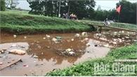 Khắc phục rác thải, xác lợn trôi trên kênh từ tỉnh Thái Nguyên về Bắc Giang
