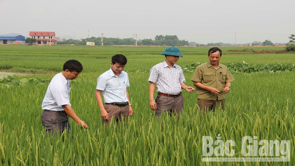 đảng bộ huyện Việt Yên, sổ việc làm tốt, học và làm theo Bác