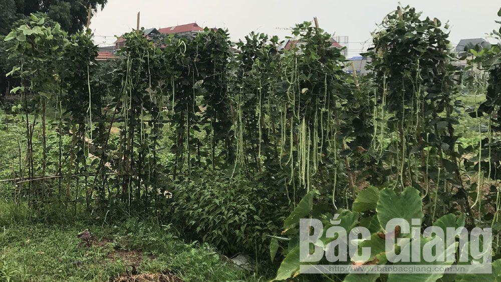 mục đích, đầu độc, phun thuốc bảo vệ thực vật, ruộng hàng xóm, Ngô Văn Dậu.