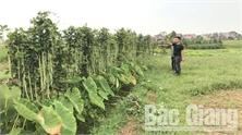 Cần làm rõ mục đích phun thuốc bảo vệ thực vật sang ruộng hàng xóm của ông Ngô Văn Dậu (xã Yên Mỹ, huyện Lạng Giang)
