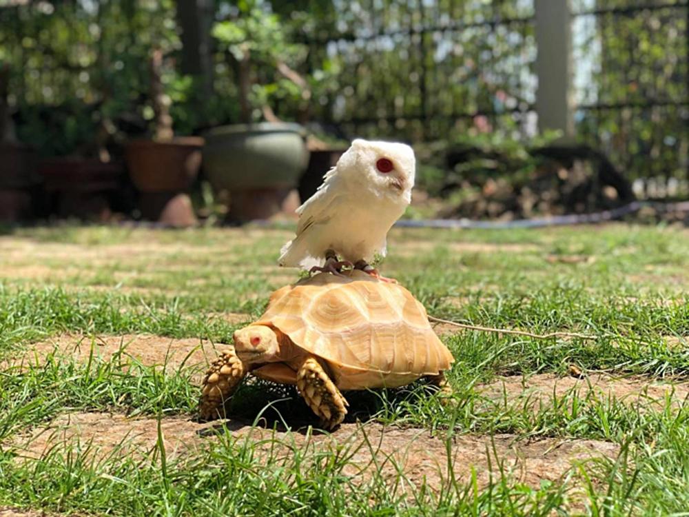 Pet reptiles, mini zoo, southern Vietnam, Ngo Hoai Nam, curious visitors, endoscopic surgery, most popular animal