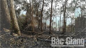 Hơn 3,3 ha rừng tại xã Đèo Gia (Lục Ngạn) bị cháy do người dân phát cây bụi, tre nứa