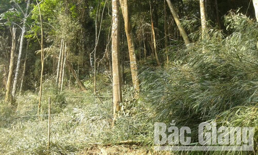 Cháy rừng, Xã Đèo Gia (Lục Ngạn), thế đại, cháy rừng tại Lục ngạn