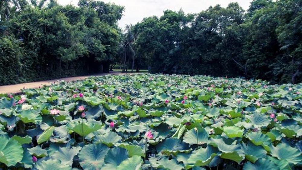 Tháng Năm, quê Người, làng Sen, Kim Liên, Hoàng Trù, Chủ tịch Hồ Chí Minh, sông Thương, Bắc Giang