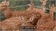 Nuôi hươu nai kiếm 400 triệu đồng mỗi năm ở Gia Lai