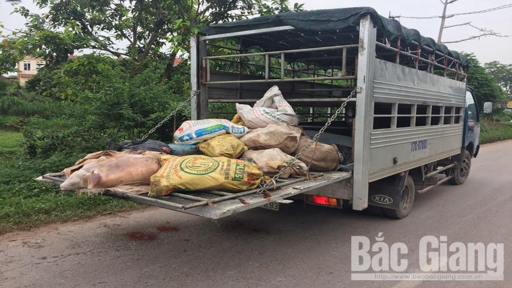 Quản lý thị trường, Công an huyện Tân Yên, đổ trộm thịt lợn hôi thối