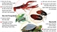 Những loài ngoại lai xâm hại nguy hiểm tại Việt Nam