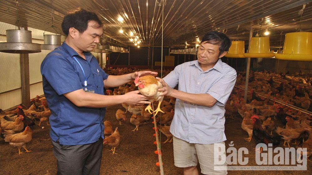 thực phẩm, lợn gà, dịch tả lợn châu Phi, Bắc Giang,