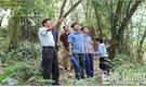 Rừng cò Hồ Biềng -  thấp thỏm nỗi lo