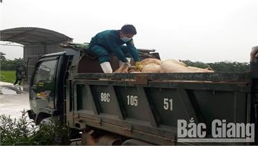 Hiệp Hòa: Lực lượng dân quân tích cực tham gia phòng, chống dịch tả lợn châu Phi