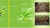 Khu bảo tồn Tây Yên Tử - Điểm đến hấp dẫn