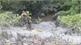 Làm rõ, xử lý nghiêm đối tượng đổ trộm hóa chất tại Lục Nam