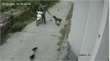 Hai tên trộm dùng súng điện trộm chó nhanh như chớp