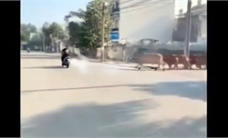Thanh niên nẹt pô bị đàn bò rượt đuổi