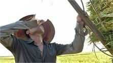 Gặt lúa trên cánh đồng nắng nóng, một người đàn ông bị vỡ mạch máu não tử vong