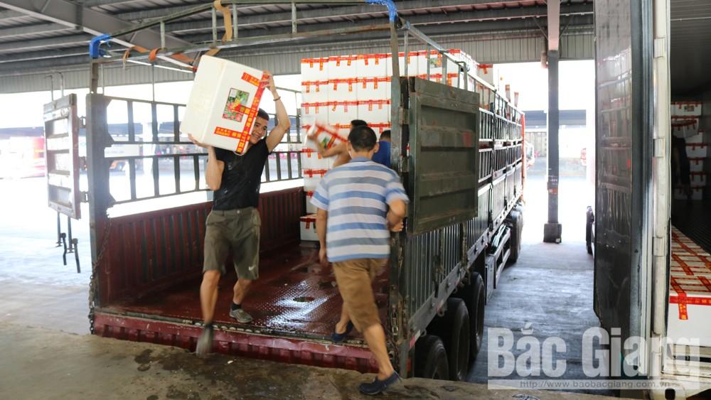 Vận chuyển vải thiều Bắc Giang mang đi tiêu thụ tại chợ Bằng Tường, tỉnh Quảng Tây (Trung Quốc).