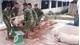 Lạng Giang: Tiêu hủy 331 con lợn mắc bệnh dịch tả lợn châu Phi tại một trang trại