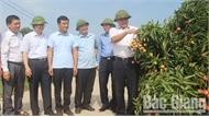 Chuyển đổi cơ cấu cây trồng, nâng cao chất lượng cuộc sống người dân