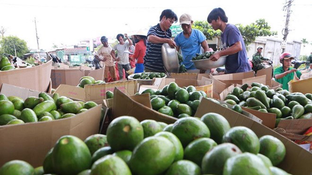 Vietnamese farm produce seeks to reach further in global market