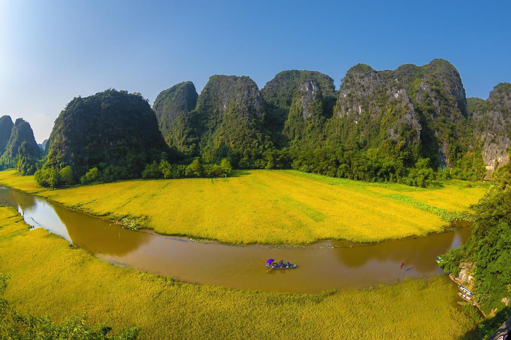 Tam Coc, silver and gold, rice fields, Ngo Dong River, Ninh Binh province,