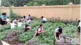 Đẩy mạnh học tập gắn với lao động, tự sản xuất rau sạch