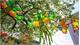 Hue to host kite festival in June
