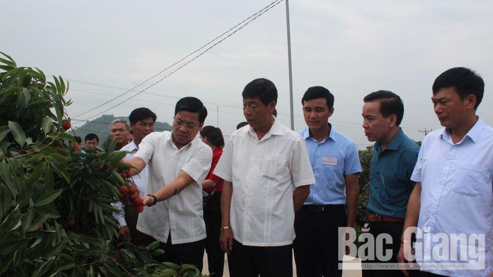 Bí thư Tỉnh ủy Bùi Văn Hải thăm mô hình sản xuất vải thiều tại xã Giáp Sơn