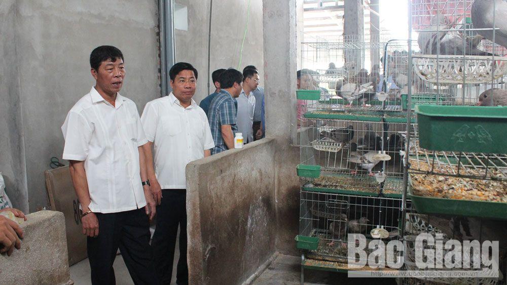 Bí thư Tỉnh ủy Bùi Văn Hải thăm mô hình nuôi chim bồ câu của gia đình Hoàng Văn Bảo, thôn Ngọt, xã Hồng Giang.