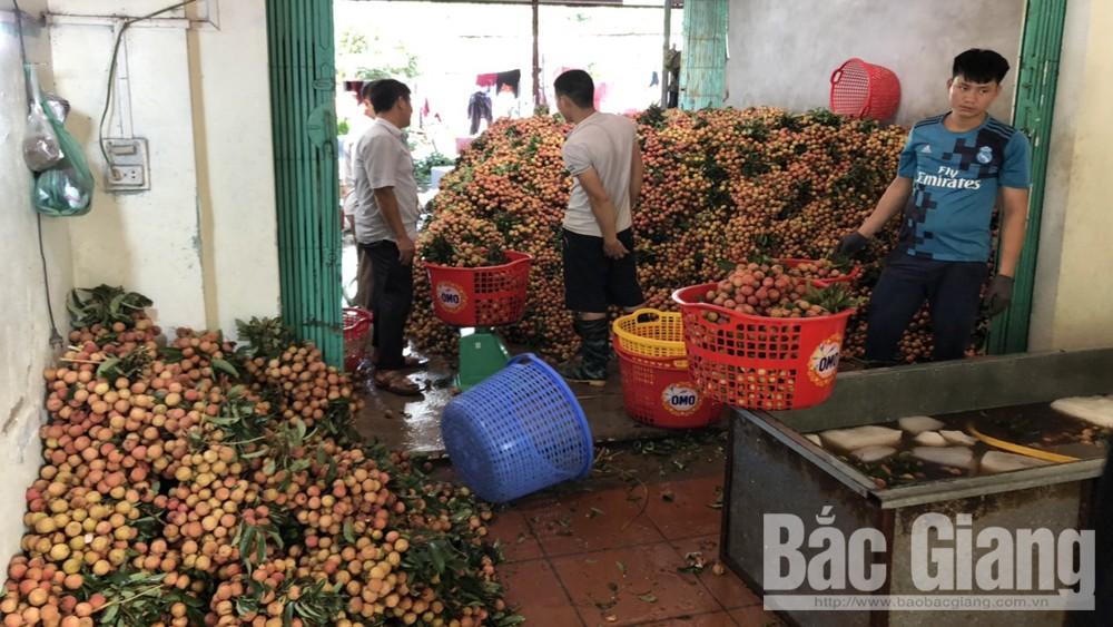 Bắc Giang, giá vải thiều sớm tăng cao, dao động từ 40-60 nghìn đồng/kg