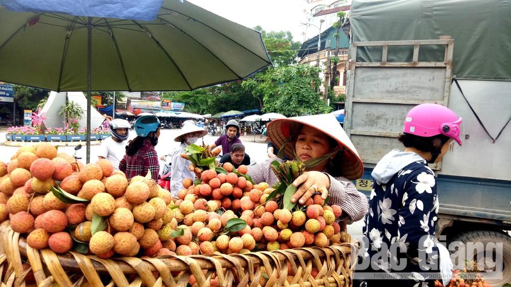 Vải thiều đầu vụ tại Sơn Động bán giá từ 25-30 nghìn đồng/kg