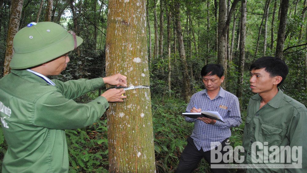 FSC, Forest Management Certification, timber export, Bac Giang province, production forest land, US and European markets, clean production, advanced technical requirements